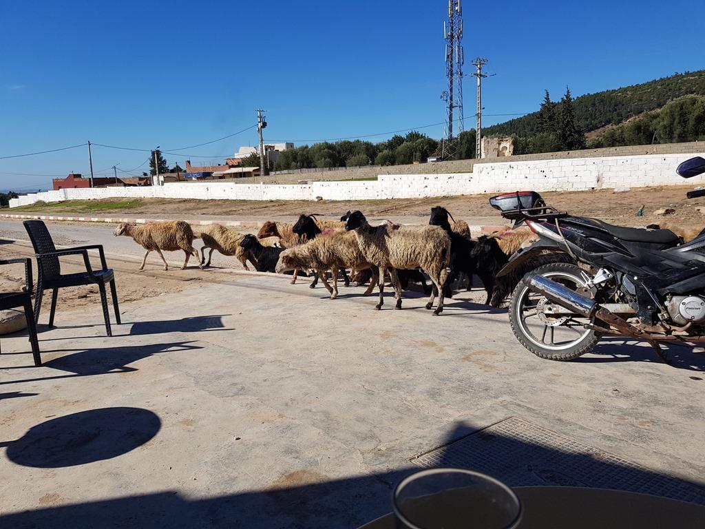 Day 85-86: Morocco, Tiflet – Meknes